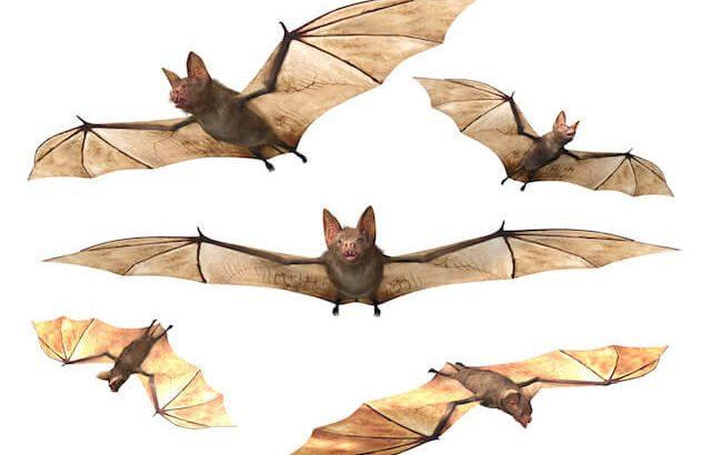 コウモリの進化